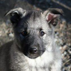 Venlan ja Stellan koirablogi